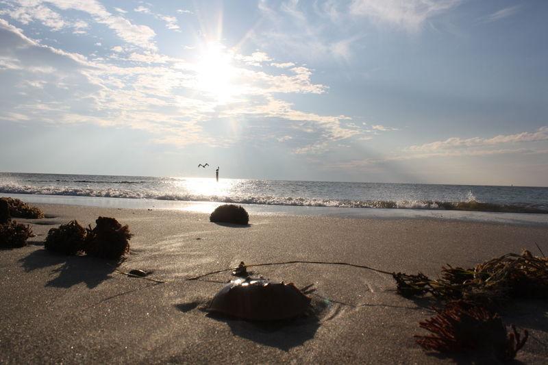 Buckroe Beach in Hampton, VA after a tropical storm. Beach Horizon Over Water Nature No People Sea Sky Sun Sunlight Water