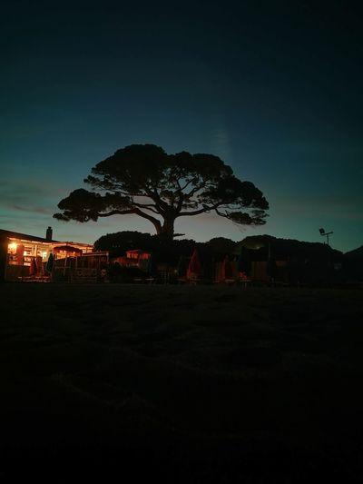 Lacona, tuscany. Astronomy City Star - Space Tree Illuminated Silhouette Sky