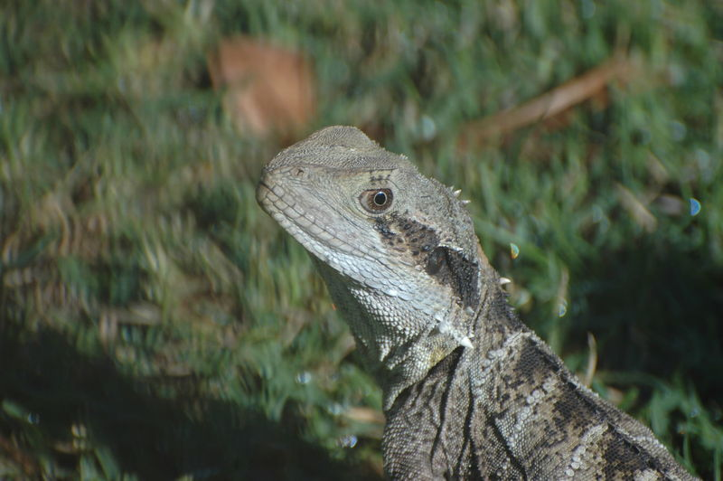 Close-up of lizard on ground