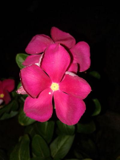 Night Life Flower