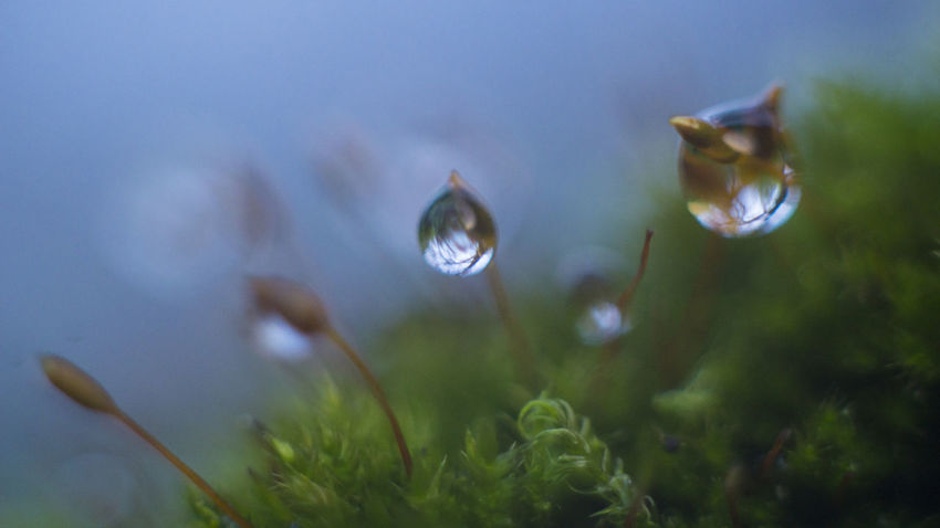 rain drops Macro Photography Macro Nature Moss & Lichen Sony Art Picture_to_keep Ethno-online EyeEm Selects Macro Beauty Arte_of_nature Instagram Picturetokeep_nature Canon Growth Nature Plant Fragility Day No People Close-up Outdoors Beauty In Nature Focus On Foreground Flower Freshness Sky