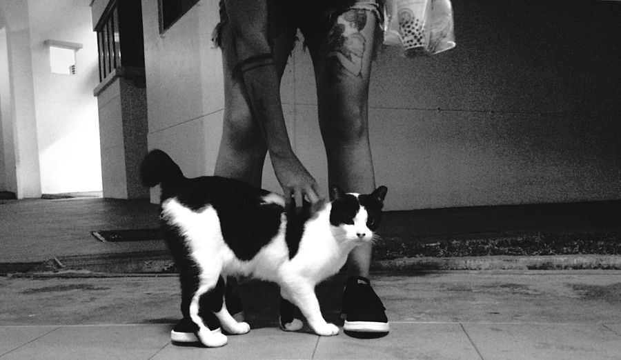 CAT. Black & White Monochrome Nightphotography IPhoneography Eye4black&white  Peoplephotography Candid Photography From My Point Of View Blackandwhite Streetphotography Urbanphotography Urban Lifestyle Black And White Photography B&w Photography Street Photography B&w Street Photography Blackandwhite Photography Black&white Black And White Open Edit