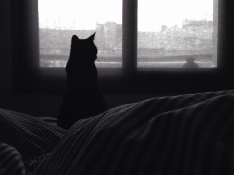 Rainy day Blackandwhite Cats Rain