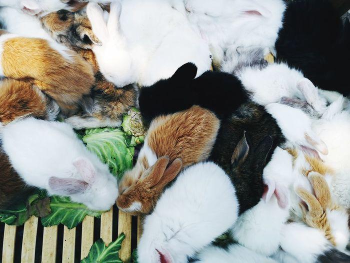 High angle view of rabbits sleeping