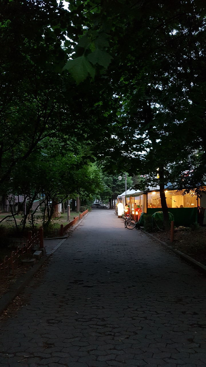 plant, the way forward, direction, tree, footpath, nature, diminishing perspective, street, no people, city, illuminated, growth, night, outdoors, architecture, transportation, vanishing point, road, lighting equipment, empty, treelined, long