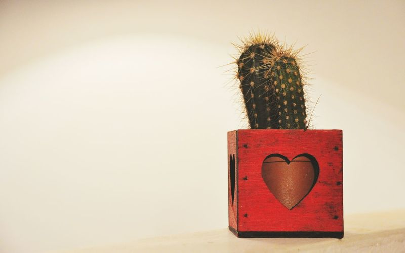 Close-up of heart shape on cactus against wall