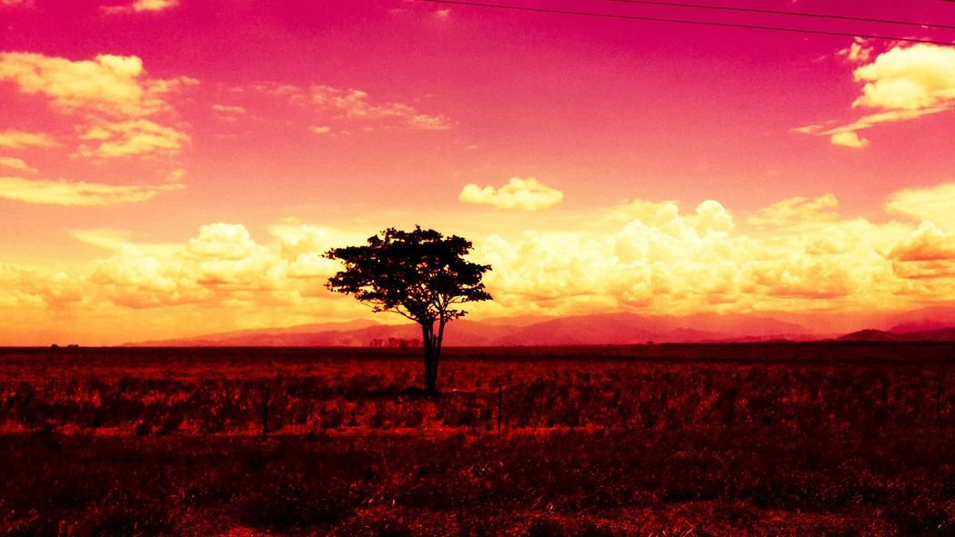 'The Lonely Tree'. Captured this tree during the drought along the Highlands highway, , Markham Valley.
