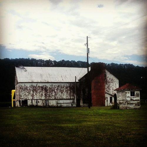 White barn (rotting) and (roofless) silo Ruraldecay Farmporn Skyporn Dryrot barn backroads ruralamerica americangothic pennsylvania trb_members1 field