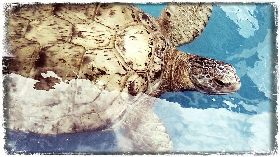 I ♥ Turtles  Sea Life Projeto Tamar Brazil