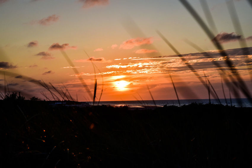 Sunset through the grass of the dunes.. #nature_collection #EyeEmNaturelover #nature #NoFilter #sunset #sun #clouds #skylovers #skyporn #sky #beautiful #sunset #clouds And Sky #beach #sun _collection #sunst And Clouds #sunsetseason In The Grass #nature Plant Sea Water Sommergefühle Breathing Space Perspectives On Nature The Great Outdoors - 2018 EyeEm Awards Capture Tomorrow