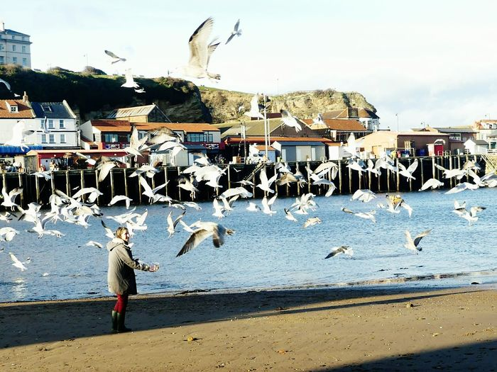 Bird Large Group Of Animals Flock Of Birds Beach Animal Themes Outdoors Day Sea Seagull Animals In The Wild Flying Water Sky Nature People Adult