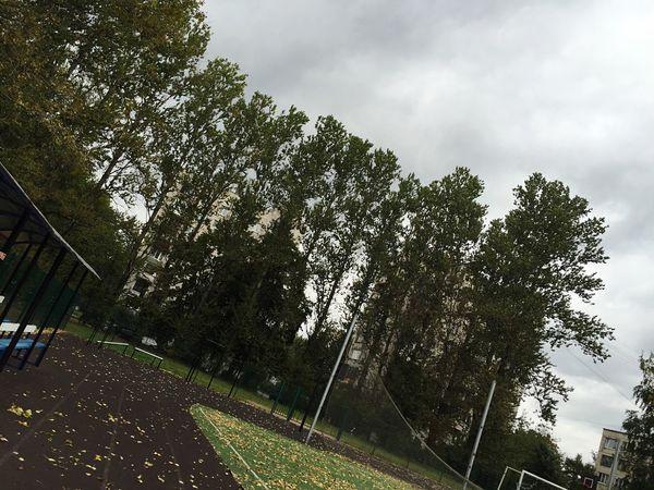 поле Field небо Sky деревья Trees Grey Cold Football Footballfield Saturday
