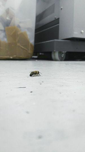 Zoomstufe 0 Rohbild Visitor @work Bienen Bei Der Arbeit Biene 🐝 by'm Spazieren Gehen  Snapshot