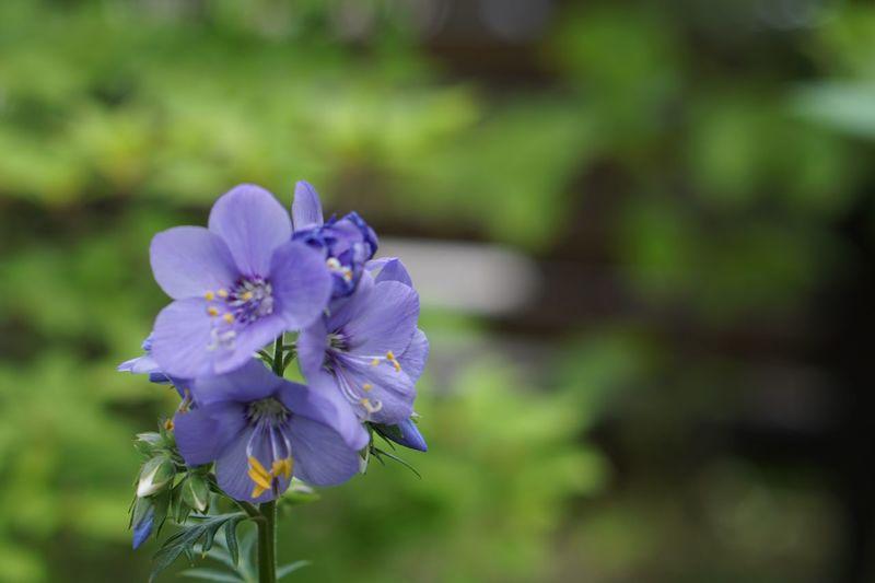 Botany Flower Fragility Freshness Plant Purple Outdoors Nature Focus On Foreground Petal