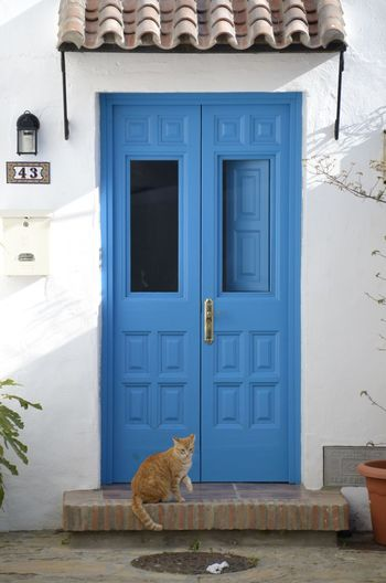 Cats Of EyeEm Cat Cats Domestic Animals No People Outdoors Feline Animal One Animal Mammal Door Entrance Animal Themes Pets Domestic Domestic Cat Blue Door Cleaning My Best Photo
