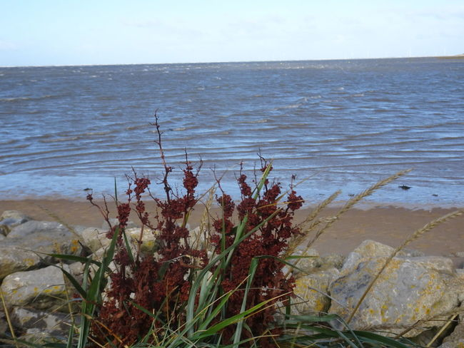 Beauty In Nature Sea Flower Outdoors Beach Autumn Day