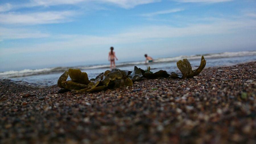 Beach Life Is A