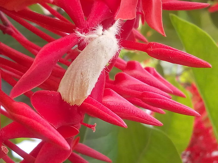 Moth Nature Insect Colourfull Colour Of Life No Edit No Filter Popular Red Flowers Moth On Flower