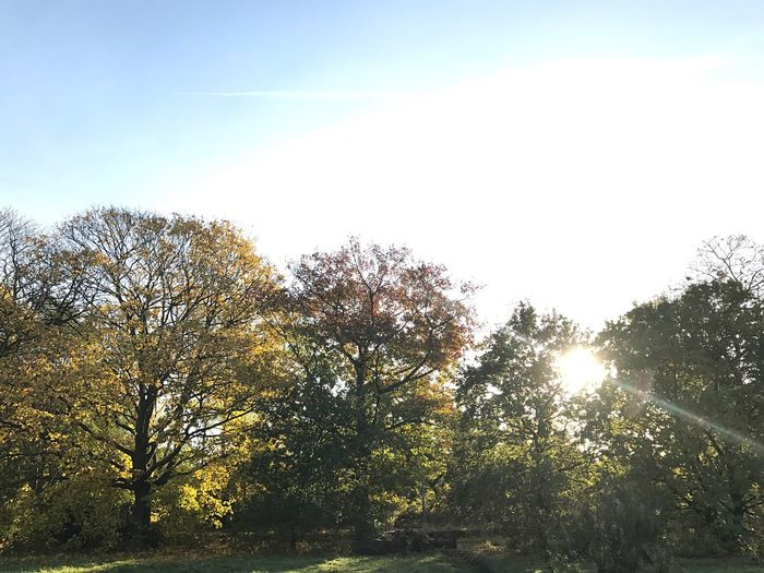 Tree Sunlight Nature Beauty In Nature Sky Outdoors No People Sunbeam Autumn Day