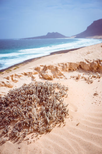 Stunning desolate landscape of sand dunes and desert plants in front of ocean waves on Baia Das Gatas in background. North of Calhau, Sao Vicente Island Cape Verde. Atlantic Ocean Cape Verde Desert Dunes Aquatic Sport Arid Climate Beach Beauty In Nature Day Drought Period Horizon Horizon Over Water Land Motion Nature No People Outdoors Sand Scenics - Nature Sea Sky Sunlight Tranquil Scene Tranquility Water