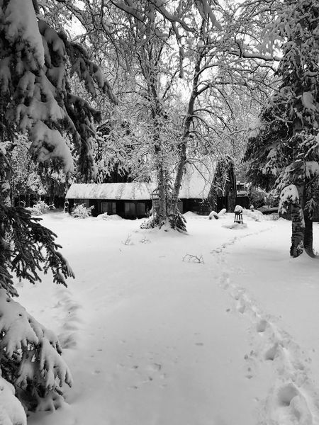 Home Sweet Home Tree Snow Cold Temperature Winter Weather Nature Outdoors No People Beauty In Nature Bare Tree Day First Snow EyeEm Gallery Personal Perspective Photooftheday Creativity EyeEm Best Shots Fresh On Eyeem  Getty Images Black And White Friday