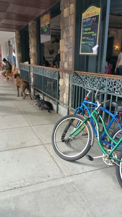 The Purist (no Edit, No Filter) Streetphotography Street Dogs Dogs Waiting For Owners Bike Restaurant Enjoying Life Wandering Around Enjoying People People Watching Hard To Wait beach town Sidewalk Cafe Sidewalk Showcase: February Seal Beach California Surf's Up