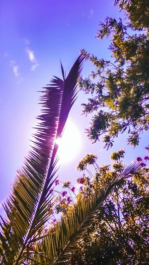 Beauty In Nature Sky Low Angle View Growth Nature No People Day Outdoors Tree Close-up Freshness Naturaleza🌾🌿 Santiago De Chile Contrast And Lights Capture Moments Photoshop Edit Photoshoot Shot Edition Lightroom Photographer Paisajes Urbanos  Violeta Energiapositiva Solcito