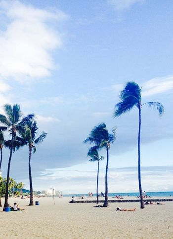Bearch Hawaii Resort Vacation Travel