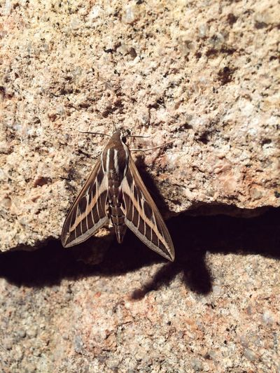 Moth on a stone Moth Animals In The Wild No People Animal Themes Sunlight Day One Animal Shadow