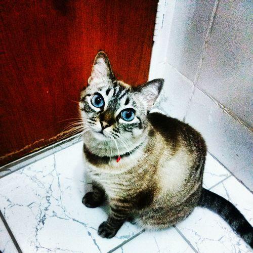 Catoftheday Mycat♥ xuxinha <3