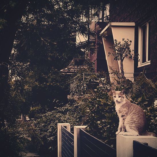 Hauntingly Beautiful Haunting  Watcher Catsofinstagram Cat Cats Cats 🐱 Cats Of EyeEm Guard Protector Check This Out Protectoradeanimales Sydney, Australia