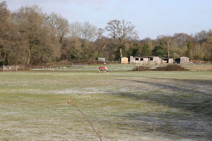 Blue Sky Day Frosty Field Grass Horse Horse With Coat Nature Outdoors People Sky Sun Surrey Countryside Tree Winter
