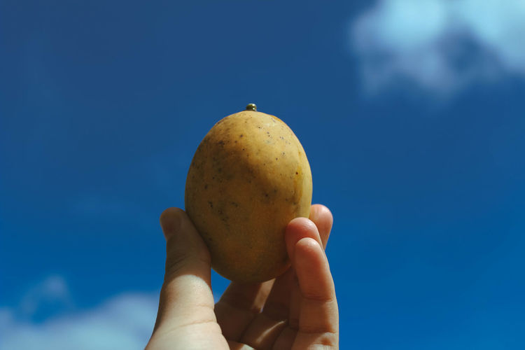 Close-up of hand holding mango against blue sky