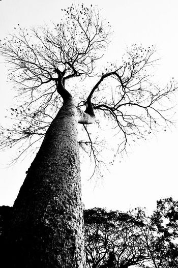 big tree Tree Nature Outdoors Thailand Blackandwhite Bare Tree B&w B&W_collection Plant On The Road