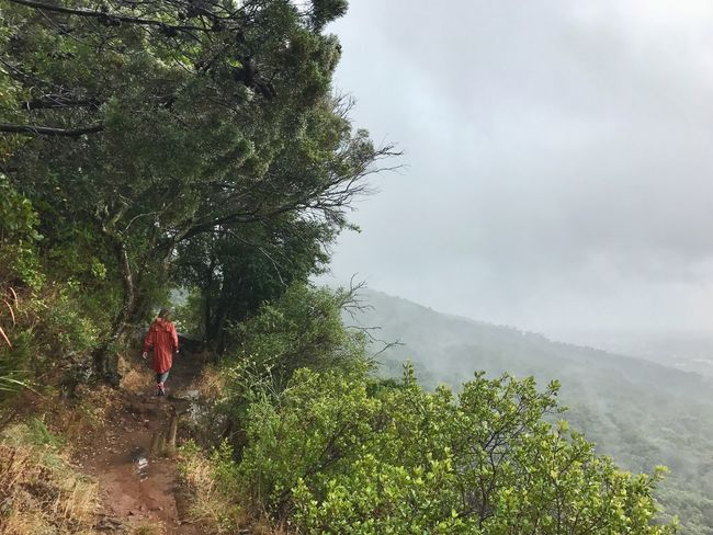 Mountain Nature One Person Day Outdoors Walking Beauty In Nature Rear View Real People Full Length Landscape Scenics Hiking Fog Tree Standing Sky Adventure Climbing Girl Kirstenbosch Botanical Gardens South Africa Travel The World