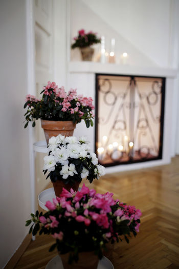 Arrangement Bouquet Bunch Of Flowers Decoration Design Flower Flower Arrangement Flower Head Flowering Plant Freshness Home Interior Indoors  Nature No People Plant Vase
