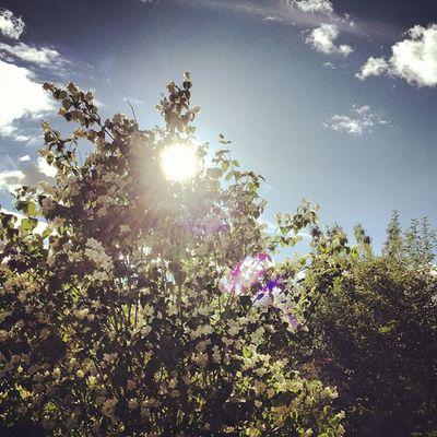 Borta bra - men alltid bäst väder i Delsbo ! H älsingland