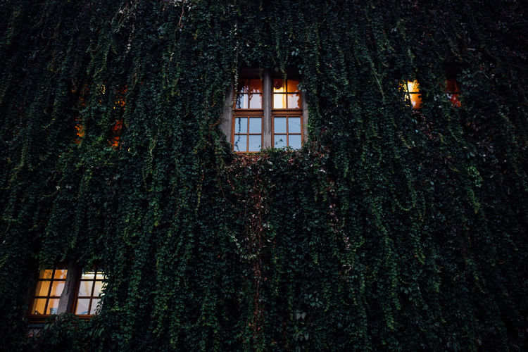 Low angle view of building covered with creeper plants