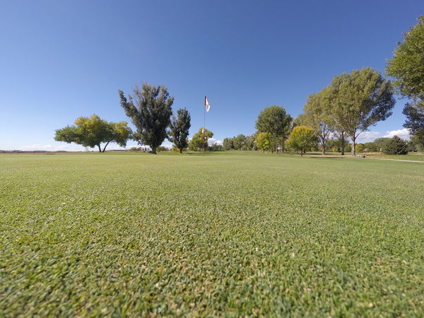 Putting green on a golf course. Clear Sky Day Golf Golf Course Golf Course Flag Golf Hole Golfing Low Angle View No People Putting Green Putting Hole Flag Sky Tree