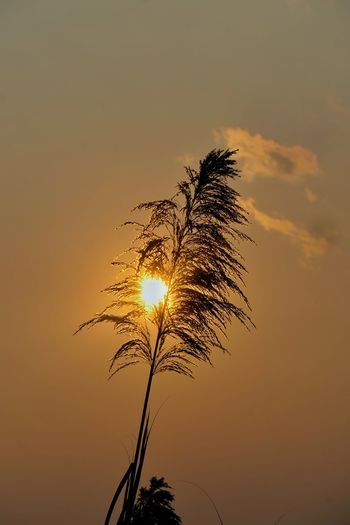 Low angle view of silhouette plant against orange sky
