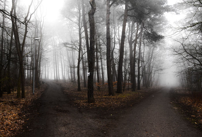 Tree Nature Tree Trunk Forest Outdoors Fog Beauty In Nature Tranquility Landscape Sky Scenics Tranquil Scene Day No People Road Tree Area Foggy Morning Decisions Path Chosen Paths Bw Ways Of Life