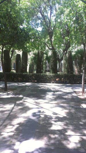 City Day Empty Road Green Growing Growth Nature No People Outdoors Shadow Solitude Sunlight Sunny Surface Level Tall Tranquil Scene Tranquility Tree Tree Lined Tree Trunk