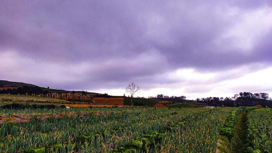 farmlandscape