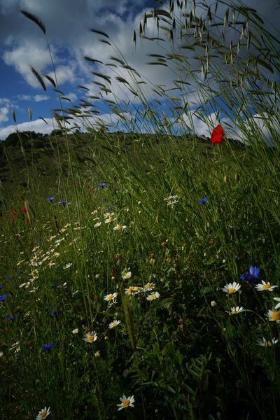 Nature_collection Flowers Lost Places Camping
