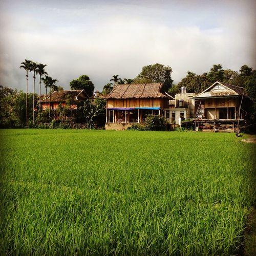Vietnam Mai Châu Xom Pom Coong White Thai Ethnic Minority Village Houses Rice Field Paddy Field Green