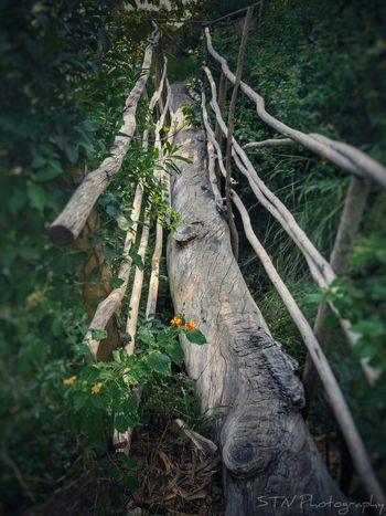 Tree Illuminated Star - Space Galaxy Scenics Water Horizon Over Water Fragility Sky Plant Flower Low Angle View Beauty In Nature Nature Growth Astronomy Storm Cloud Tree Trunk Growth Nature Outdoors Branch No People Day Close-up