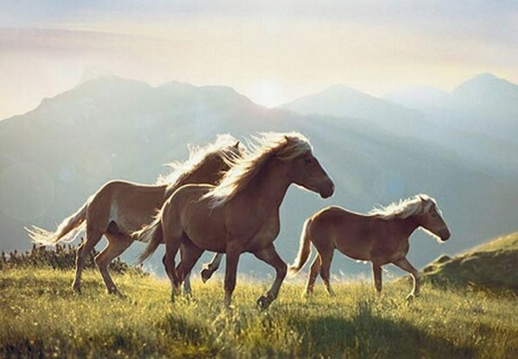 I Love Horses Thats My Hores Love Her :) Hanging Out Lord :) Relaxing Hello World Cheese! Check This Out Enjoying Life Taking Photos