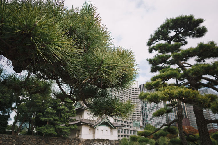 Beautiful view of downtown Tokyo with skyscrapers and green park with pond. Selective focus. Tree Plant Growth Green Color Nature No People Built Structure Day Building Exterior Architecture Low Angle View Sky Tropical Climate Palm Tree Outdoors Building Branch Beauty In Nature Tree Trunk Tranquility Japan Tokyo,Japan ASIA