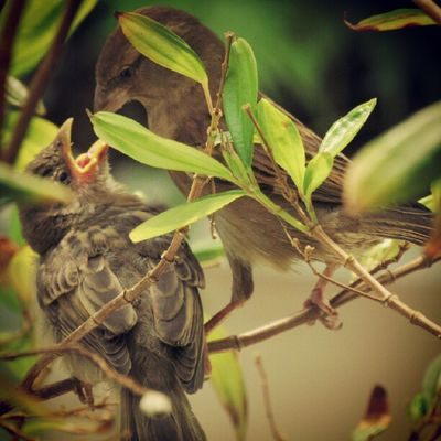I LOVE this pic... Bird Igerscampinas Instagallerys Instagalleries instagram