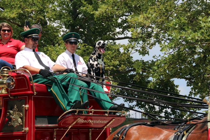Anheuser-Busch Clydesdales Day Domestic Animals Headwear Helmet Horse Horse Cart Horseback Riding Mammal Men Nature One Animal One Person Outdoors People Real People Riding Sitting Tree